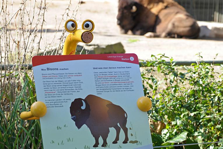 Wassily & Elektra – RheinEnergie / Kölner Zoo